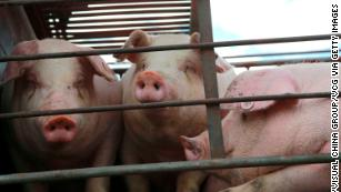 China has a new plan to solve its pork problem