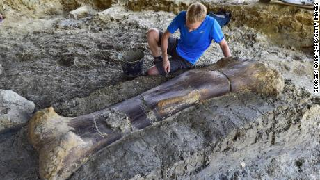 New bone, who dis? Paleontologists say this femur belongs to one of the biggest dinosaurs of all time