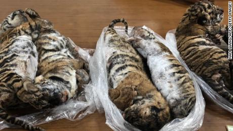 Vietnam state media reported that seven tiger carcasses were seized by police in Hanoi
