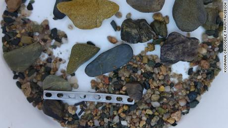 The plate was found among stones inside the crocodile's stomach.