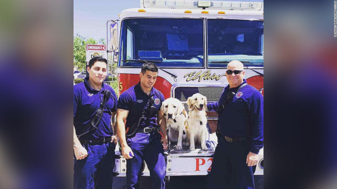 Hospital dogs brought in to help El Paso first responders