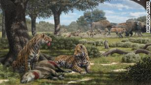 Fossils in La Brea Tar Pits reveal why coyotes still exist, but not saber-toothed cats