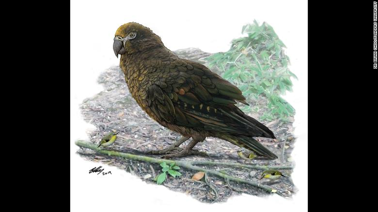 Paleo discoveries of 2019 - Page 2 190806134645-ancient-finds-giant-parrot-exlarge-169