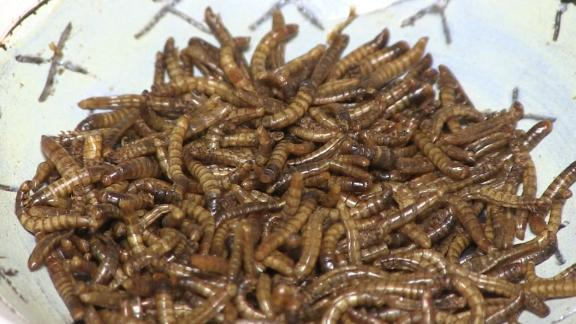 Try dried mealworms at this insect-only restaurant
