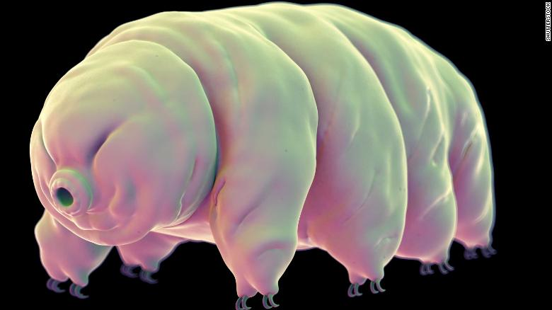 Thousands of tardigrades -- also known as 'water bears' or 'moss piglets' -- were on board the Beresheet spacecraft when it crash landed on the moon in April.