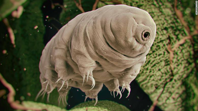 Tardigrades live all over the world in some of the most extreme environments.