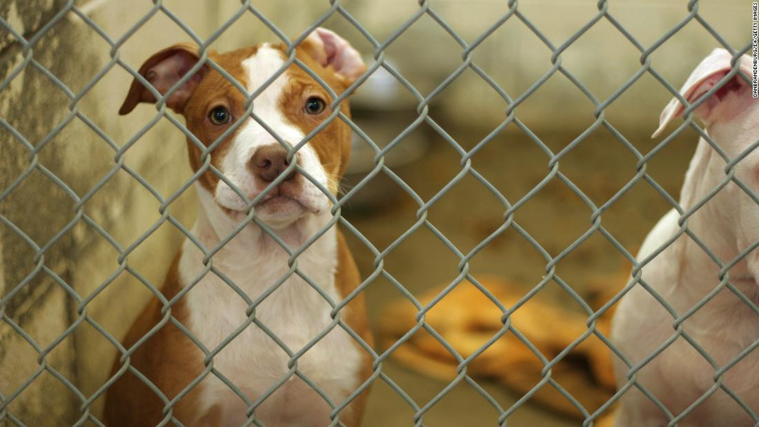 Delaware is being recognized as the first no-kill state for animal shelters