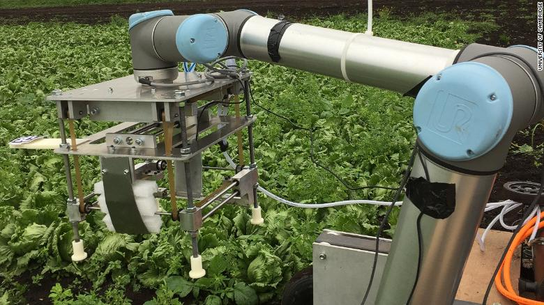 The Vegebot uses machine learning to identify ripe, immature and diseased lettuce heads