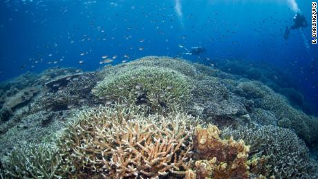 Scientists studied 2,500 coral reefs to figure out how to save them