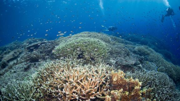 Corals in the waters of Borneo, Malaysia.
