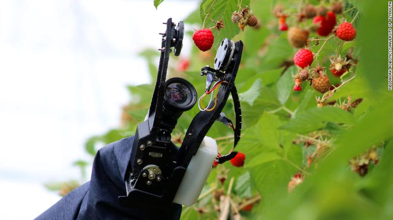 Fruit picking robots like this one, developed by Fieldwork Robotics, operate for more than 20 hours a day
