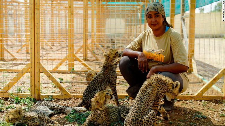 Veterinarian student Neju Jimmy lives in the shelter and is the main care-giver of the rescued cheetahs.