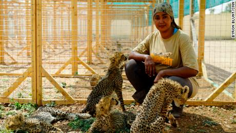 Student veterinarian Neju Jimmy lives in the shelter and is the primary donor to the cheetahs rescued.