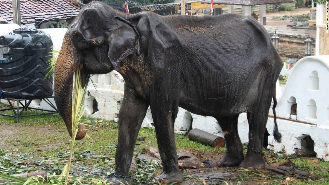 Elephant whose emaciated appearance sparked international outrage has died, charity says
