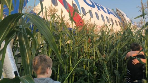 The Airbus A321 Ural Airlines plane of the Ural Airlines is seen after making an emergency landing in a field near Zhukovsky International Airport on Thursday.