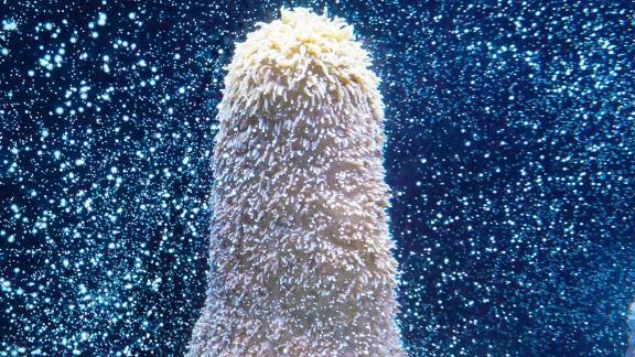 Pillar coral in the Flordia Aquarium greenhouse in Tampa, Florida.