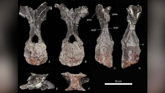 Vertebrae fossils of a previously undiscovered type of stegosaurus were found in Morocco. Researchers say they represent the oldest stegosaurus found.