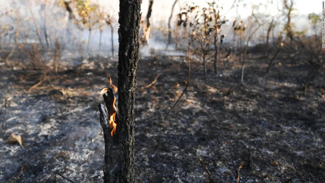 The Amazon rainforest is on fire. Here's what that means for the environment
