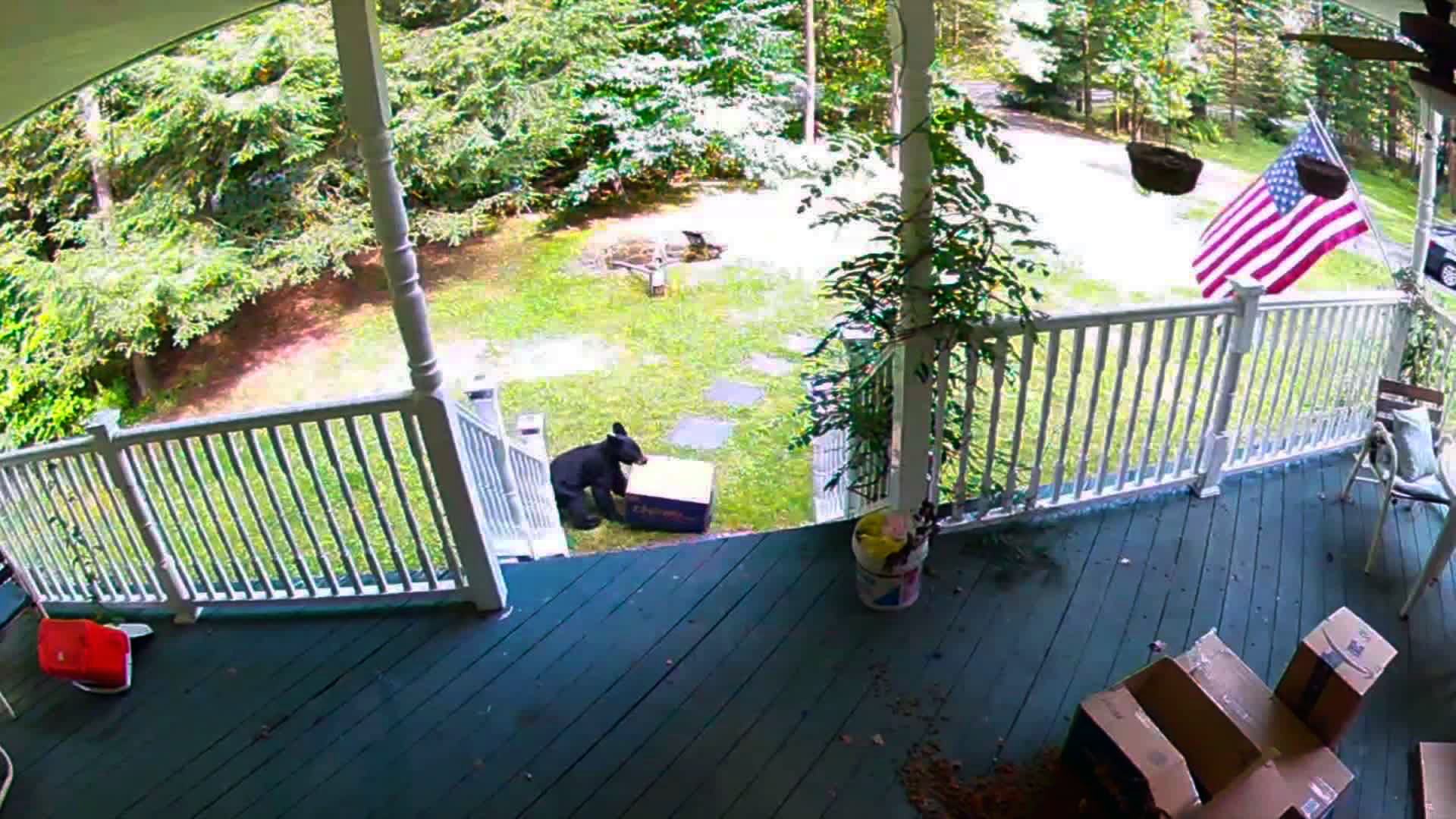 Bear bandit caught stealing dog food delivery - CNN Video