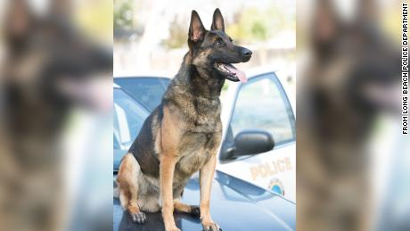 The temperature was 89 degrees the day this Long Beach K9 officer died