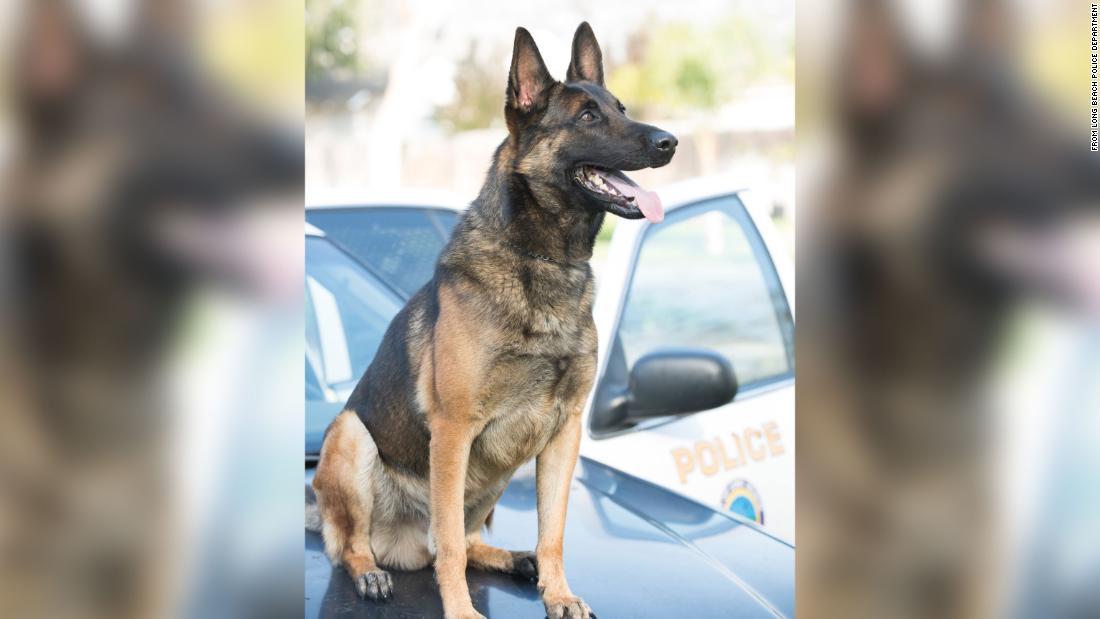 California police say K9 died in hot patrol car