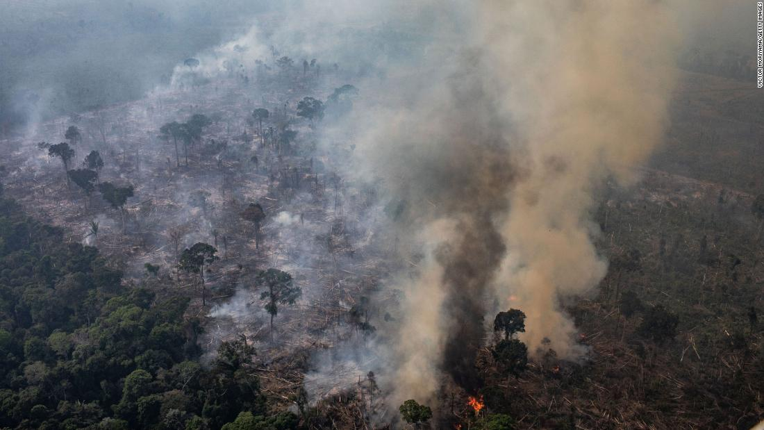 Amazon deforestation rate hits highest level in over a decade