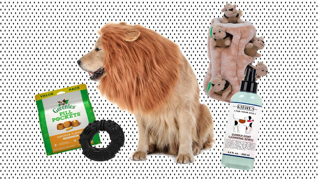 It's National Dog Day: 25 ways to celebrate for under $25
