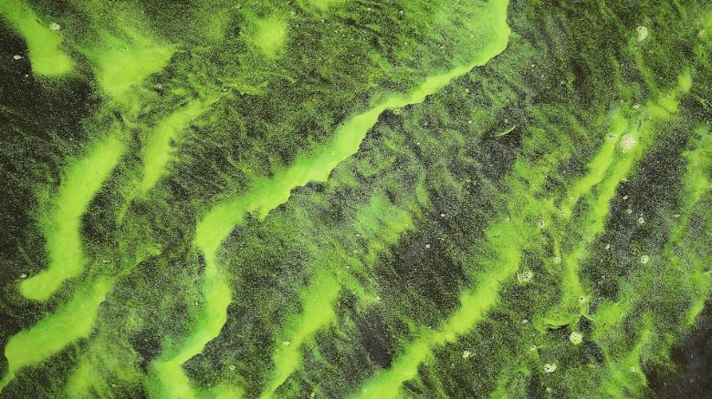 Harmful algae blooms (HABs) found in 3 New York City parks - CNN