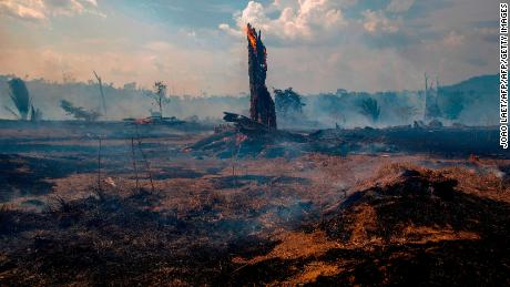 Bolsonro bans land clearing fires in the Amazon for 60 days