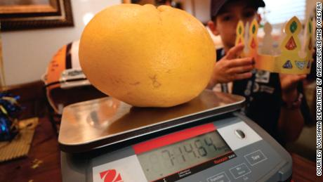 Louisiana state officials weighed and measured the grapefruit when it was picked in January.