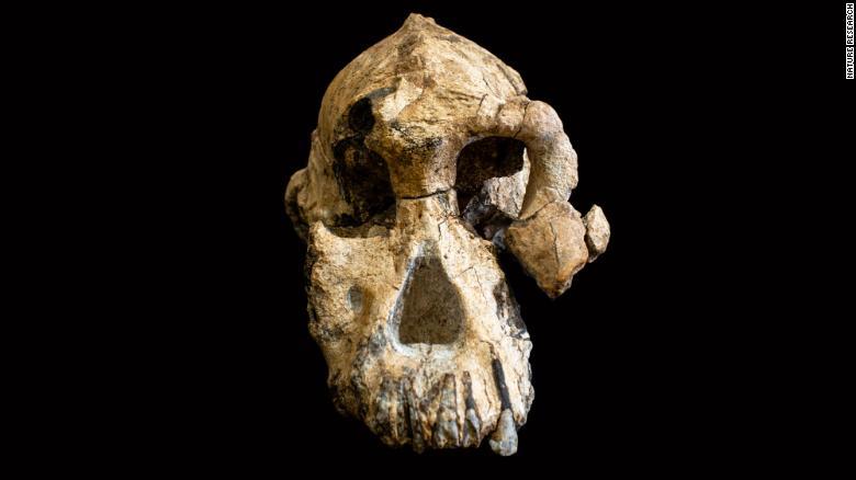 El cráneo de anamensis.