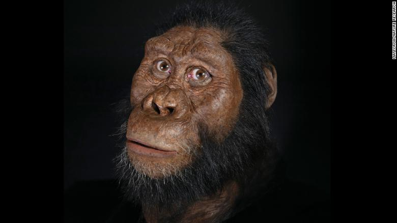 A facial reconstruction of amanensis.