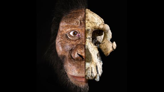 A complete skull belong to an early human ancestor has been recovered in Ethiopia. A composite of the 3.8 million-year-old cranium of Australopithecus anamensis is seen here alongside a facial reconstruction.