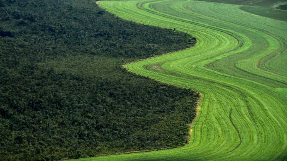 Native Cerrado is being cleared to make way for agriculture.