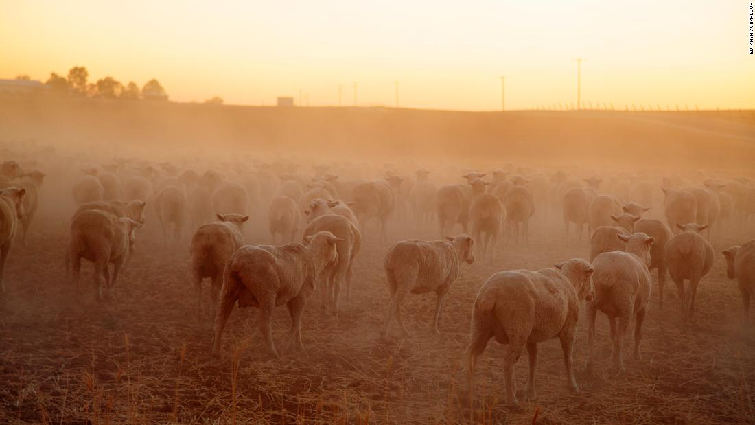 "Sheep graze in the dry, dusty fields of Farmersville, California. ""This image was made in 2014 while working on a short film about the ongoing drought in California,"" photographer <a href=""https://edkashi.com/"" target=""_blank"">Ed Kashi </a>said. ""Tens of thousands of acres of arable land was turning to dust, massive orchards were being ripped out due to a lack of irrigation water, and farmers and ranchers who for generations had worked this land were wondering if their way of life was sustainable."" Intense droughts like the one that plagued California this decade are <a href=""https://advances.sciencemag.org/content/1/1/e1400082"" target=""_blank"">becoming more likely due to global warming.</a>"