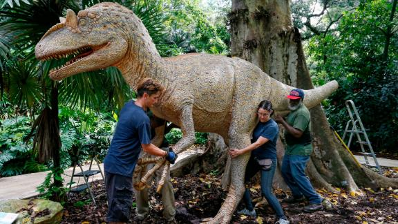 Workers at Flamingo Gardens in Davie, Florida, move an Allosaurus statue on August 30.