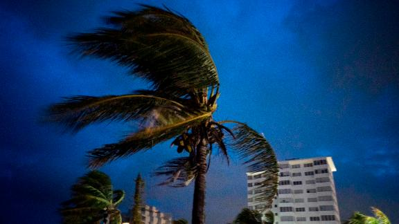 Palm trees blow in strong winds prior to Dorian