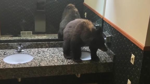Hotel guests find bear lounging on ladies' room counter