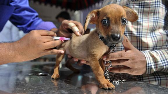 British vets are concerned about a dramatic drop in pet vaccination levels.