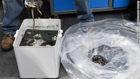 A city sanitation worker scoops up dead rats during Thursday's press conference.