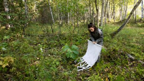 A member of health researcher Micah Hahn's team looks for ticks that may now survive in Alaska.
