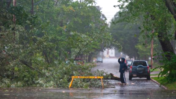 A man looks a tree that fell in Moncton, New Brunswick, on September 7.