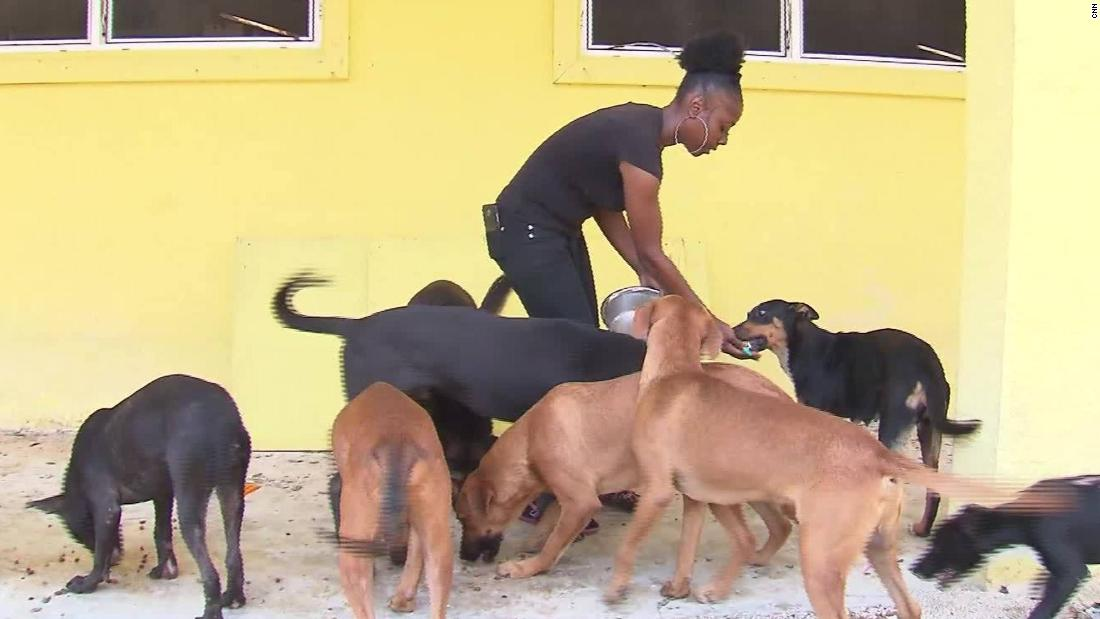 90 dogs and 7 cats died in flooding at a Bahamas animal shelter