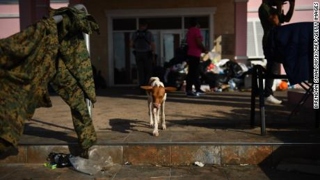 "A dog walks by damage in Marsh Harbour, Bahamas, on September 7, 2019, in the aftermath of Hurricane Dorian. - Bahamians who lost everything in the devastating passage of Hurricane Dorian were scrambling Saturday to escape the worst-hit islands by sea or by air, after the historically powerful storm left at least 43 people dead with officials fearing a ""significantly"" higher toll. (Photo by Brendan Smialowski / AFP)        (Photo credit should read BRENDAN SMIALOWSKI/AFP/Getty Images)"