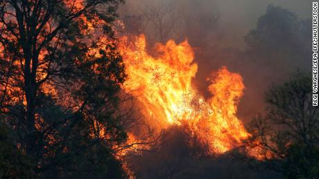 Australia's severe fires an 'omen' of blazes to come