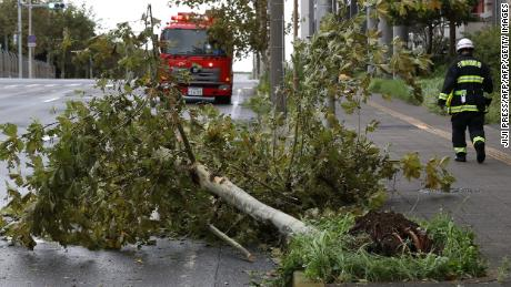 A firefighter walks past a fallen tree caused by Typhoon Faxai in Tokyo on September 9, 2019.