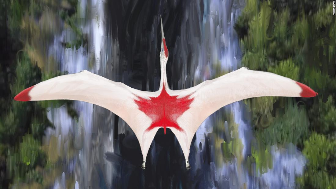 An artist's illustration of Cryodrakon boreas, one of the largest flying animals that ever lived during the Cretaceous period. Although researchers don't know the color of Cryodrakon's plumage, the colors shown here honor Canada, where the fossil was found.