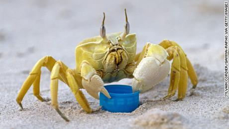 "Researchers studied the ghost crab and found that it could produce a ""rasping sound"" by ""grinding the teeth of the foregut."""