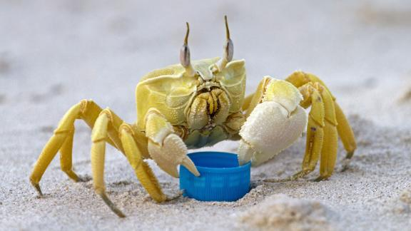 """Researchers studied the ghost crab and found that it could produce a """"rasping sound"""" by """"grinding the teeth of the foregut."""""""