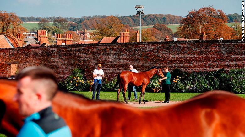 Potansiyel alıcılar açık artırmadan önce atları inceleyebilir.